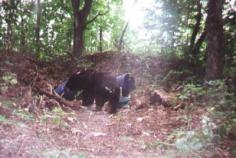 Trail Cam Photos 1