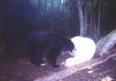 Trail Cam Photos 5