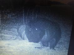 Trail Cam Photos 8
